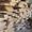 Пиломатериалы(сосна, ясень, дуб) #1027972