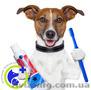 Стоматолог для животных