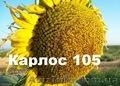 Соняшникове насіння Карлос105 (105дн. вегетації)