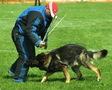 Воспитание собак и хозяев.